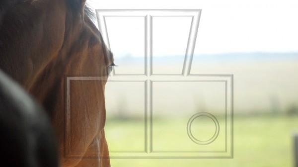 Pferd guckt aus Stall in die Ferne