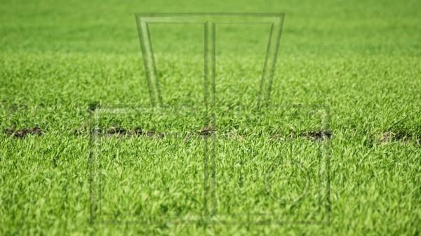 Furche im Rasen von der Seite