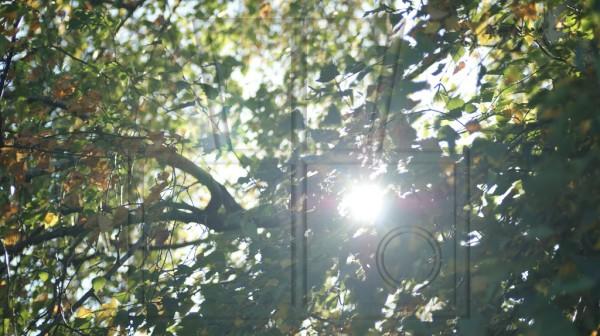Sonne strahlt durch Herbstblätter einer Birke
