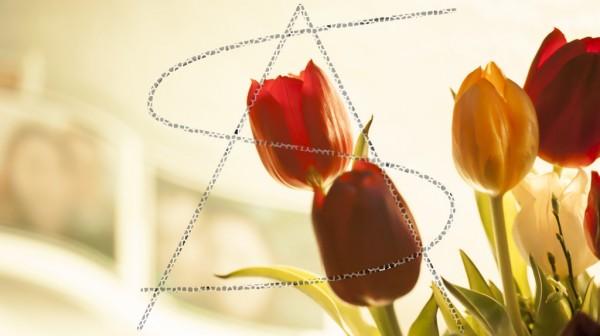 Tulpen mit Fotos im Hintergrund