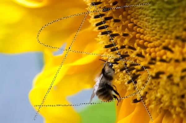 Makro einer Biene an einer Sonnenblume im Kleinformat