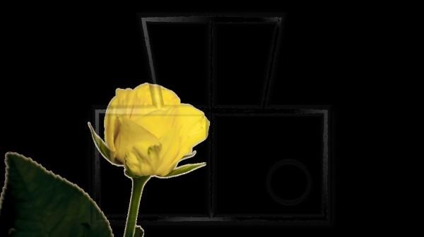 einfache gelbe Rose freigestellt