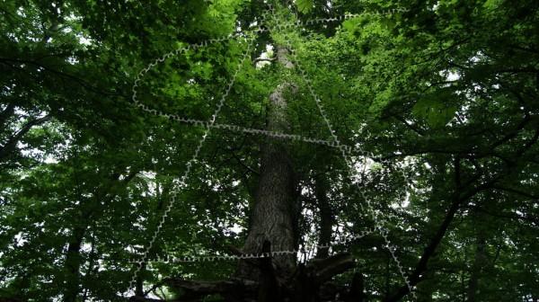 entwurzelter Baum wird von anderen gehalten