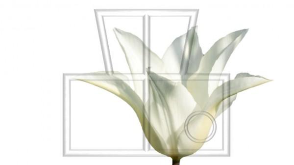 freigestellter Blütenkelch einer weißen Tulpe