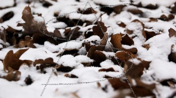 Eichenblätter unter einer dünnen Schneeschicht