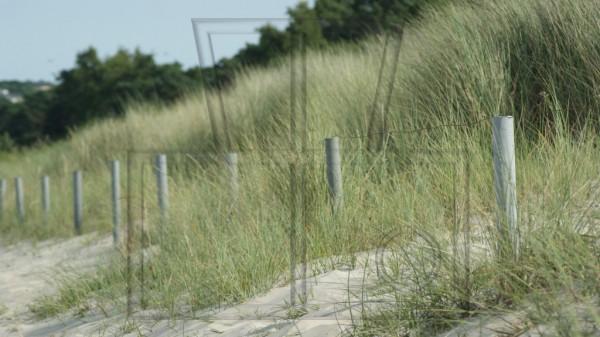 Begrenzung zur Düne am Sandstrand