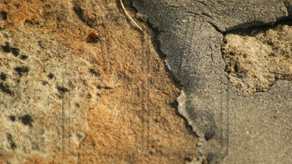 ein Marienkäfer auf gefestigtem Steinufer