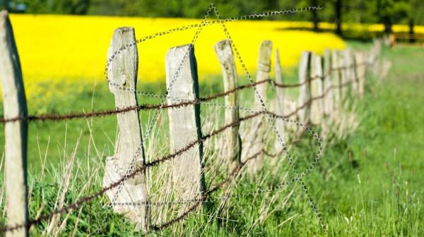 alte Weidenbegrenzung aus Stacheldraht