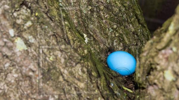 blaues Osterei in einer Korkenzieherweide