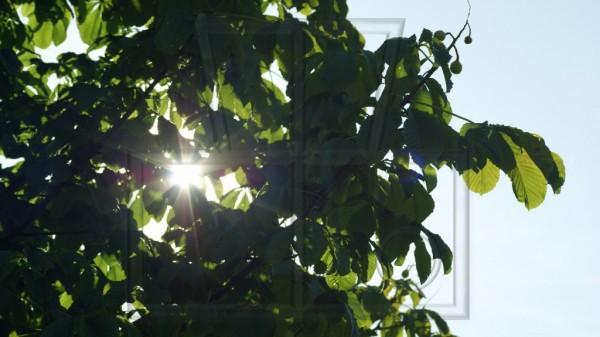 Sonne strahlt durch Kastanienbaum im September